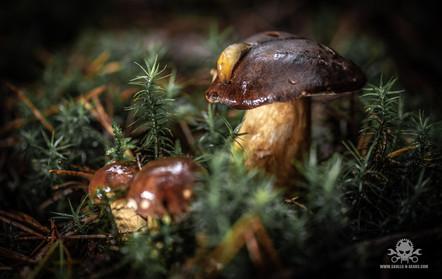 Pilze_Herbst-238.jpg