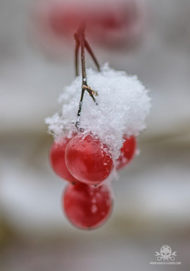 Winter am See 011