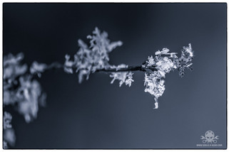 Winter am See 022