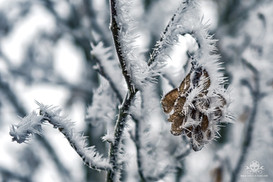 Winter - Eislandschaften 006