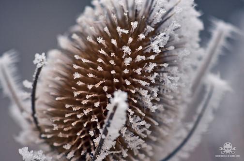 Winter - Eislandschaften 010