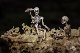 Skeleton Family