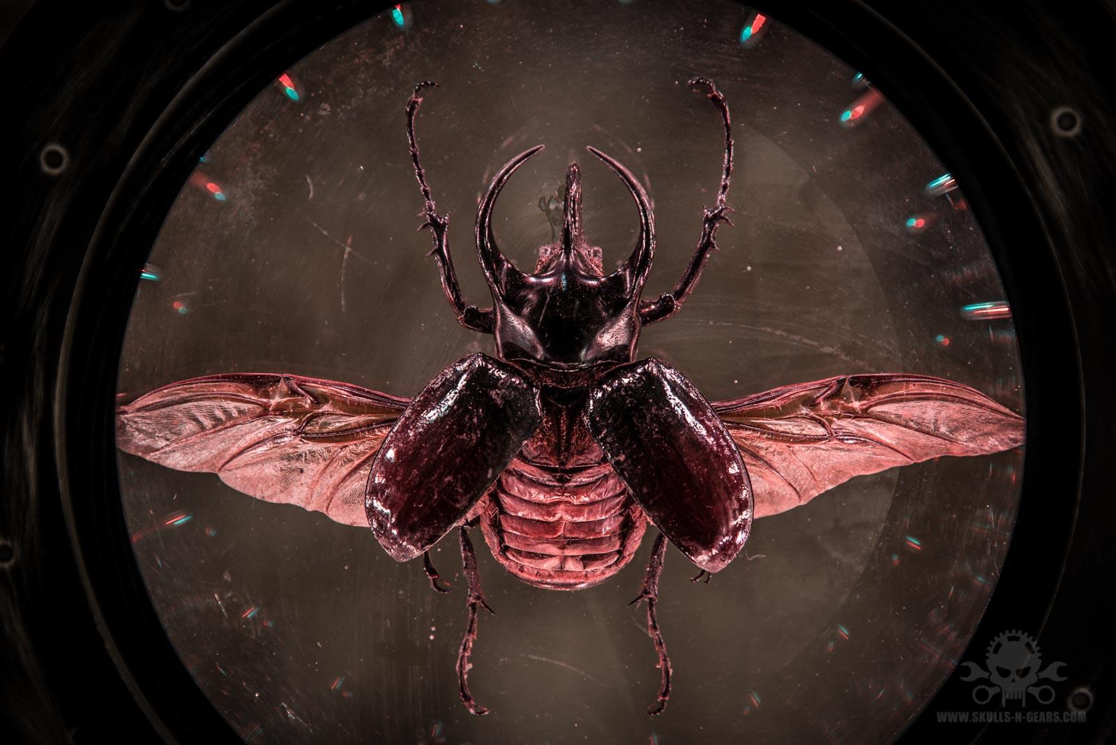 Devilseye [020030025]