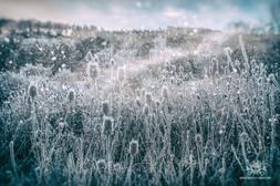 Winter - Frost-153.jpg