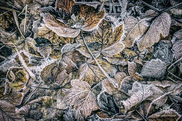 Winter - Frost-216.jpg
