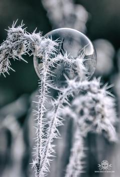 Winter - Frost-167.jpg