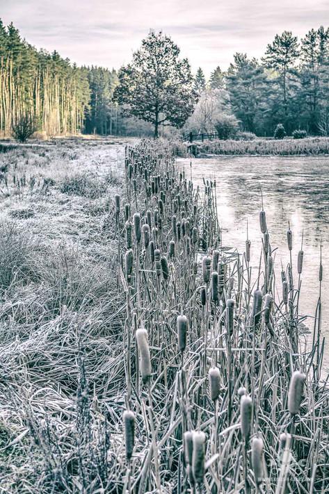 Winter - Frost-102.jpg