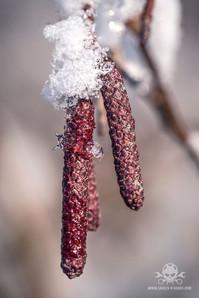 Winter am See 054