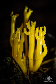 Pilze_Herbst-221.jpg