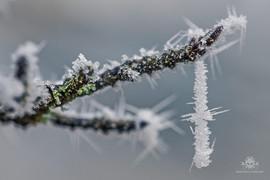 Winter am See 055