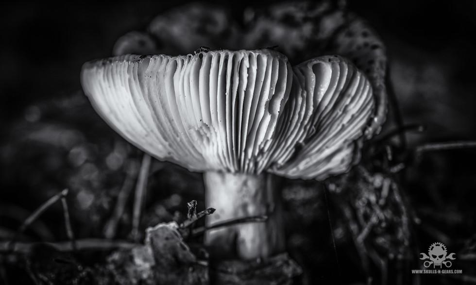 Pilze_Herbst-279.jpg