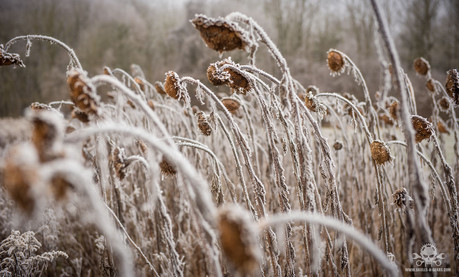 Winter am See 058