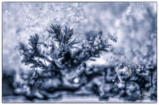 Winter am See 023