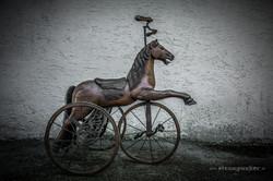 pferd-10.jpg
