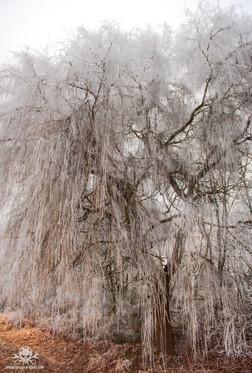Winter am See 056