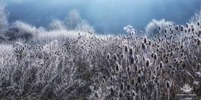 Winter - Frost-277.jpg
