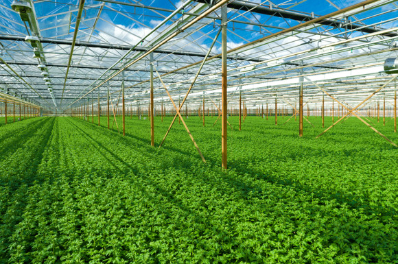 indoor-farm.jpg