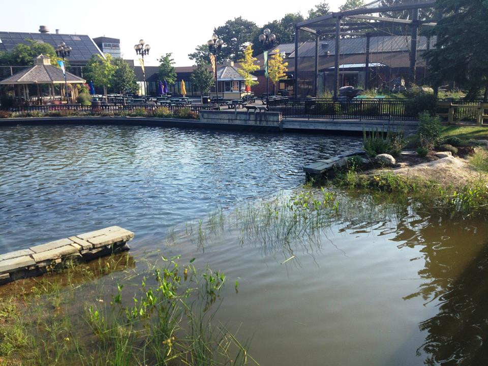 stormwater wetlands at Rosemond Guiford Zoo.jpg