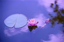 lotus-1205631_1280_edited.jpg