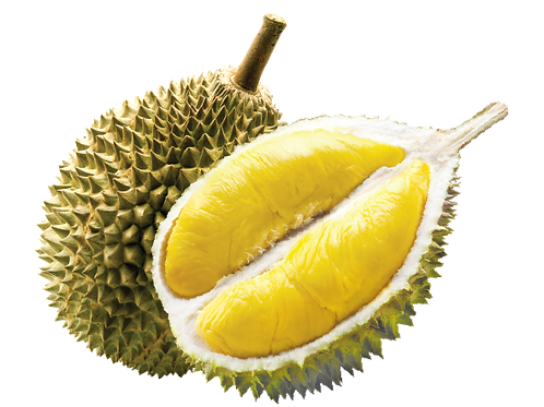 Fresh Durian Supply