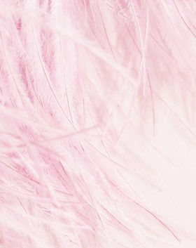 pink feather background_edited.jpg