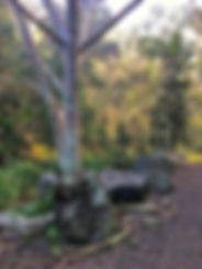 Mt Coot-tha Summit track tree root  29.6