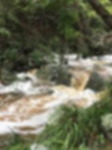 rainfall down Mt Coot-tha Summit Track.j