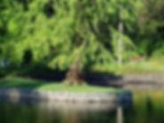 Maree Robertson Lake & tree Botanic Gard