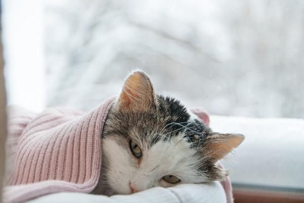 Online Cat Zine
