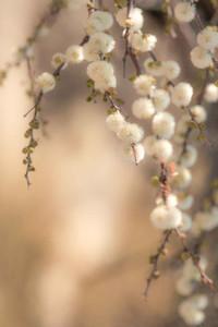 Plants in Kalahari
