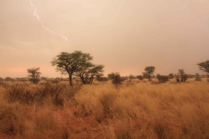 Light in Kalahari
