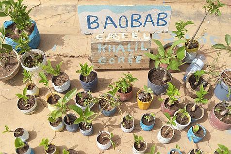 baobabplants_9338s.jpg