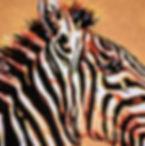 zebra%5B1%5D.jpg