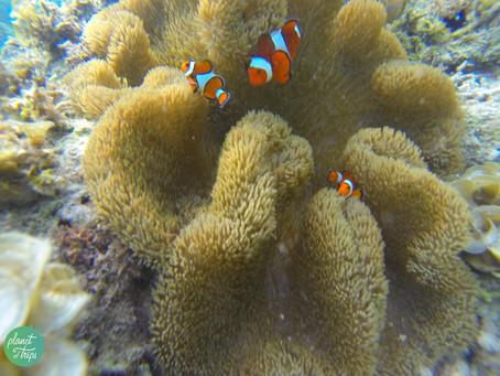 Corales...