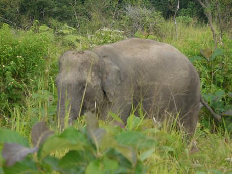 Donde viven los Elefantes.
