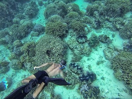 """La vida """"secreta"""" de los corales...."""