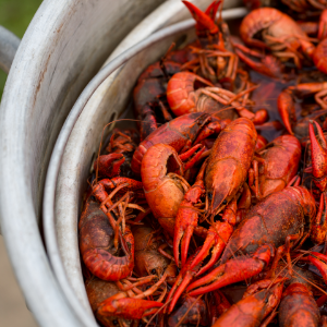 Mudbugs.png