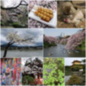 voyage japon libellule & sakura hanami printemps 2018