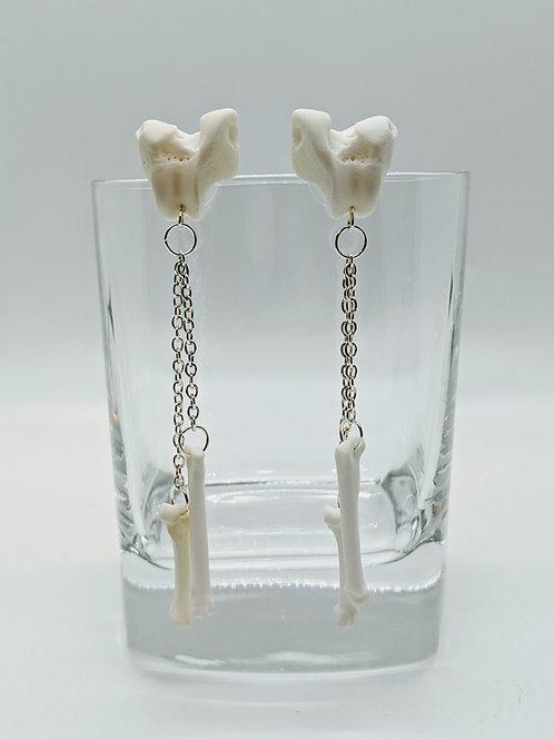 Raccoon Femur Distal End Earrings with Carpals