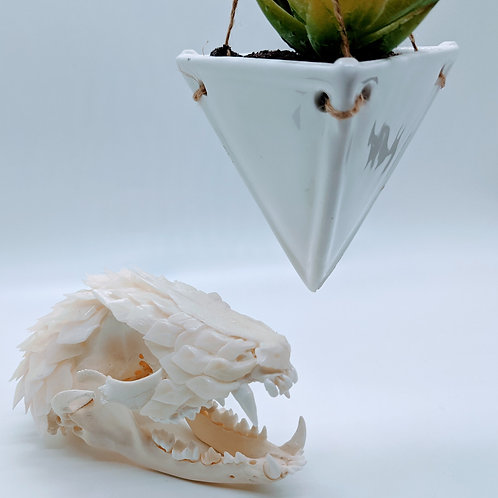 Raccoon Skull Layered with Spotted Garfish Scales