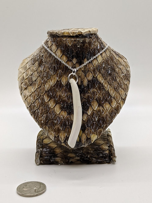 "Wild Boar Tooth not wrapped 18"" 925 Silver Plated Chain"