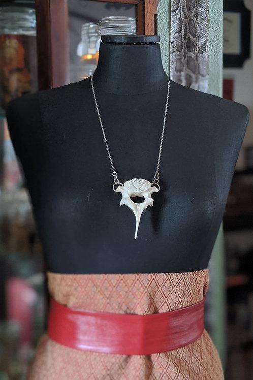 Wild Boar Thoracic Vertebrae Necklace