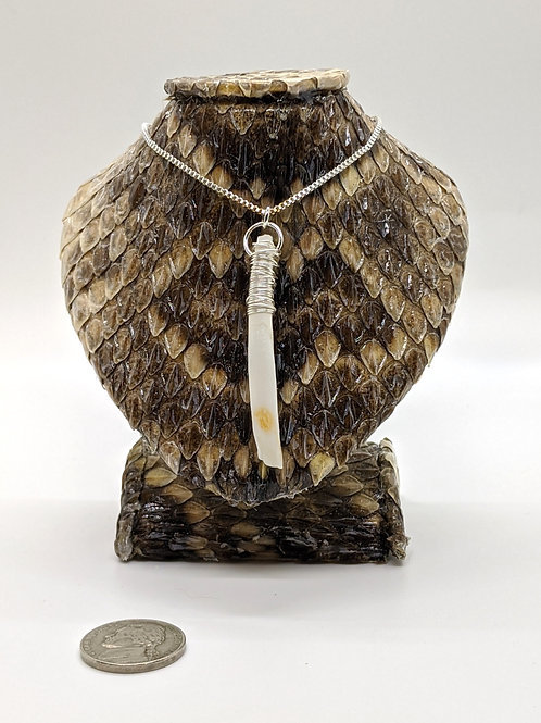 "Wild Boar Tooth Wrapped 18"" 925 Silver Plated Chain"