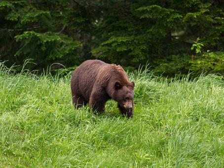 Shooting Black Bears
