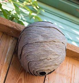 tarif destruction nid frelon jardin haie buisson