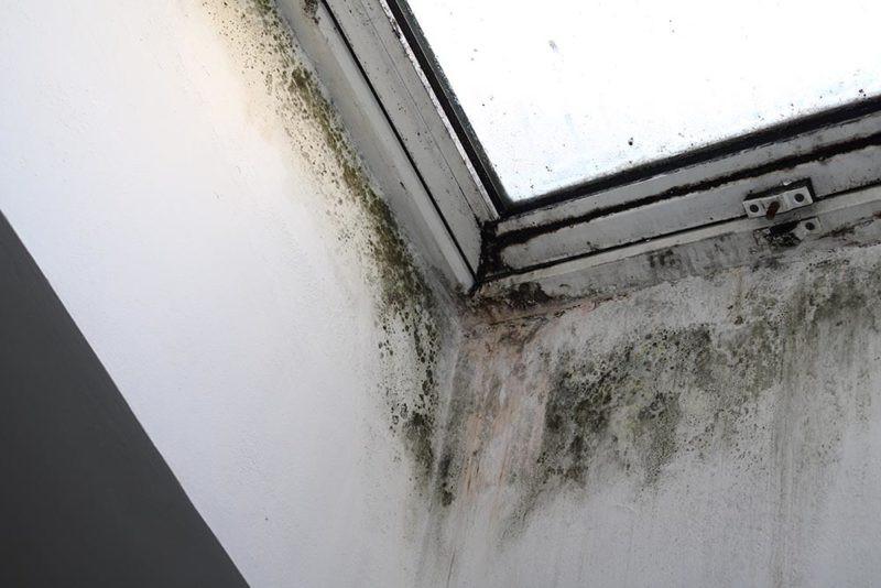 repeindre un mur humide comment faire?