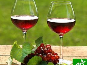 Vin bio : quelles différences avec le vin classique?