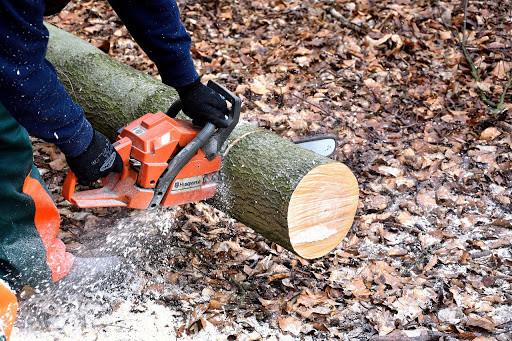 comment réussir un élagage d'arbre à Pau