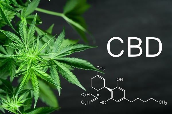 la mode du cbd cannabidiol en france