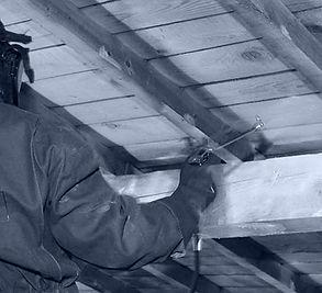 traitement du bois capricorne insectes xylophage termites vrillettes